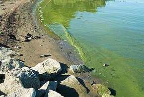 Blaualgen im Badesee
