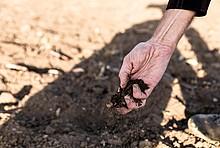 Trockener Feldboden - von oben recht kommt Hand ins Bild, die trockene Erde greift.