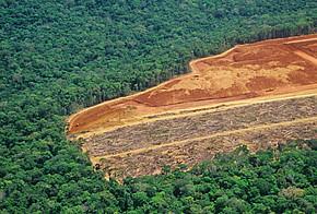 Ausrottung des Regenwaldes aus der Vogelperspektive.