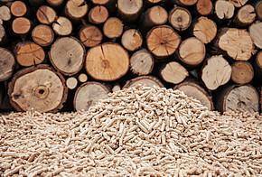 Holzpellets vor Holzstämmen