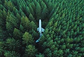Wald mit Flugzeug in der Mitte