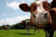 Fleischproduktion und CO2-Emissionen.