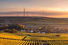 Deutsche Landwirtschaft: Weinanbau in Mölsheim