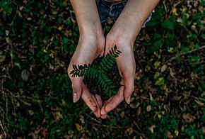 Erde und eine Pflanze werden in den Händen gehalten.